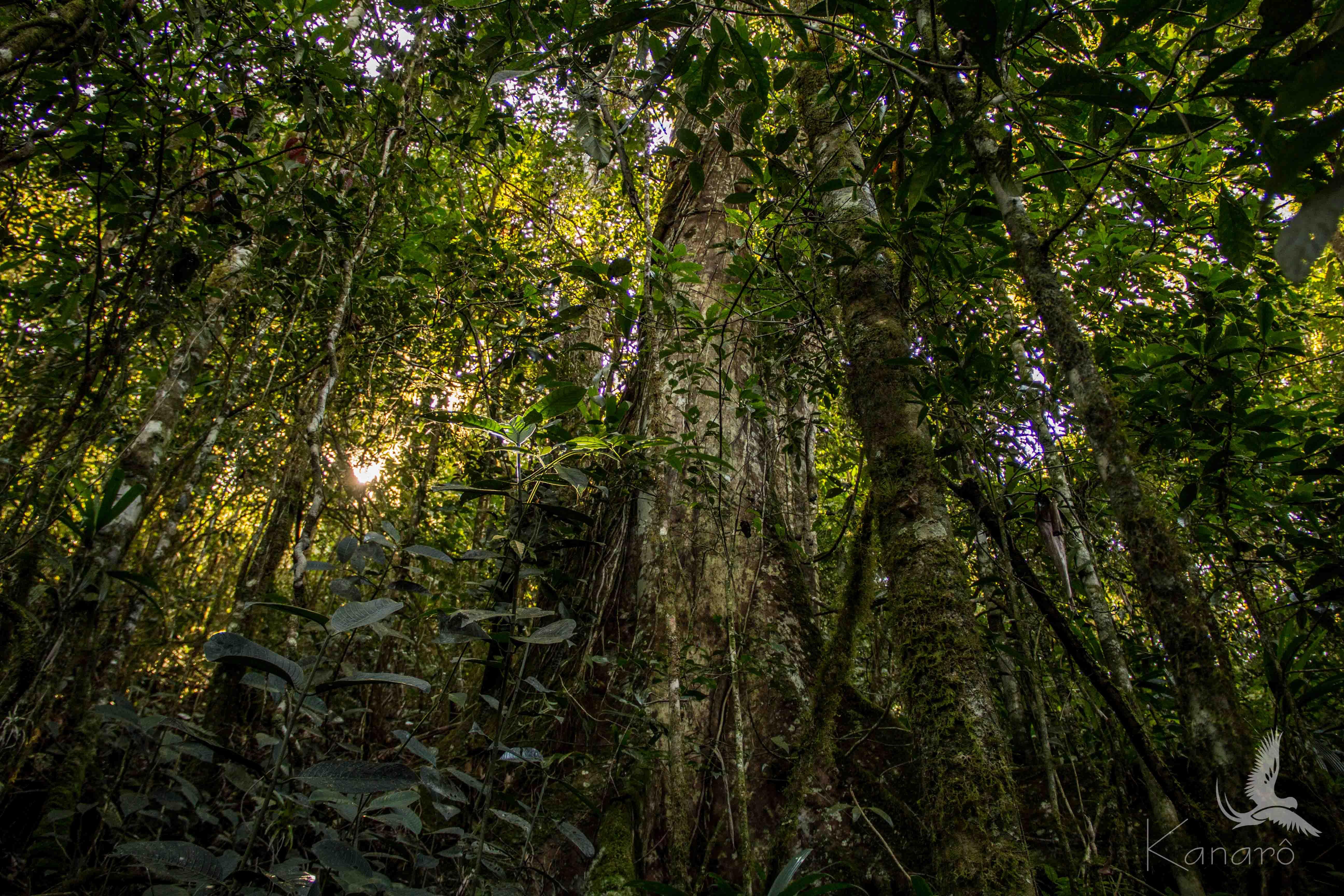 inside the Forest.jpg