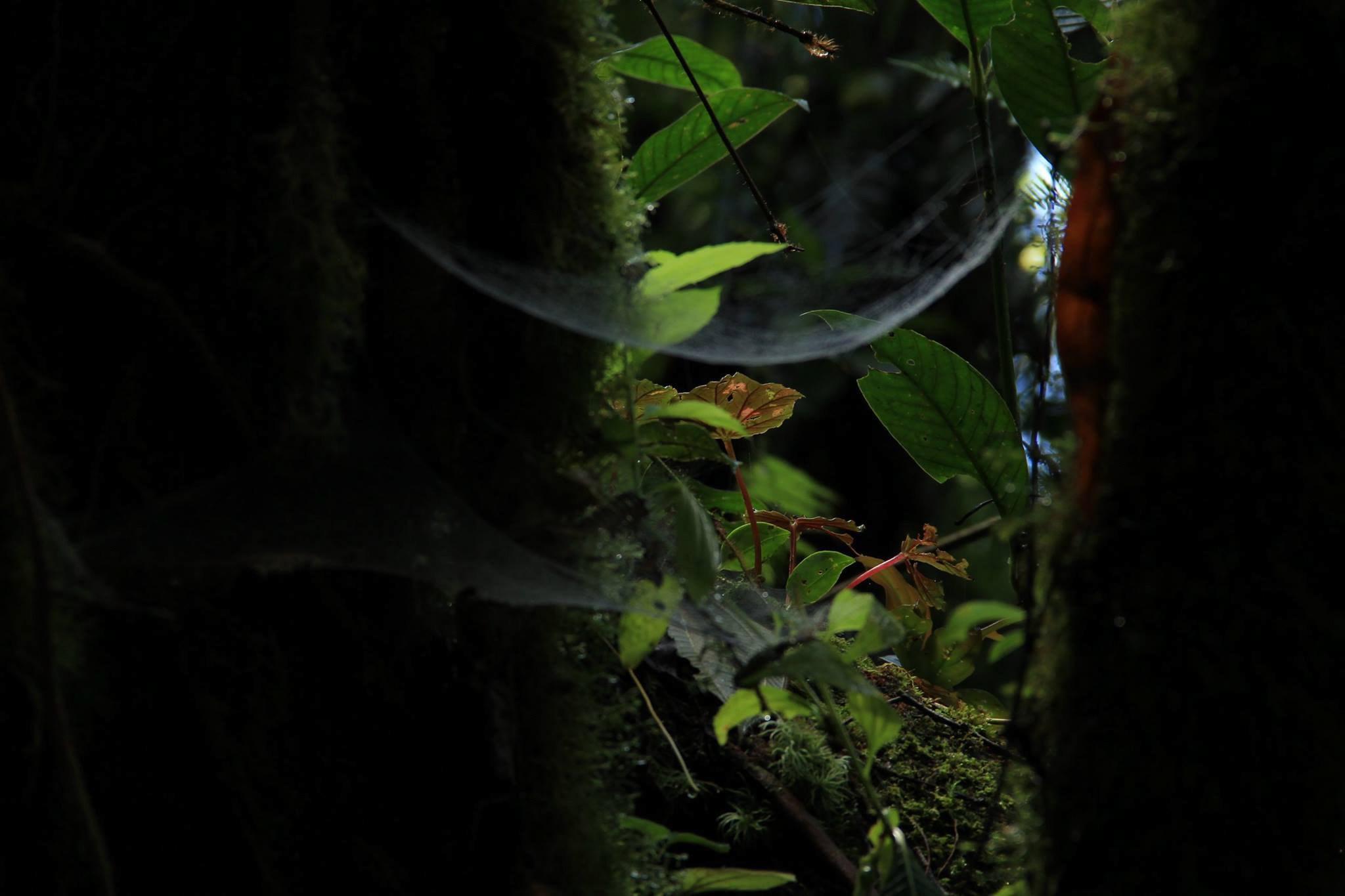 Spider Web SBR.jpg