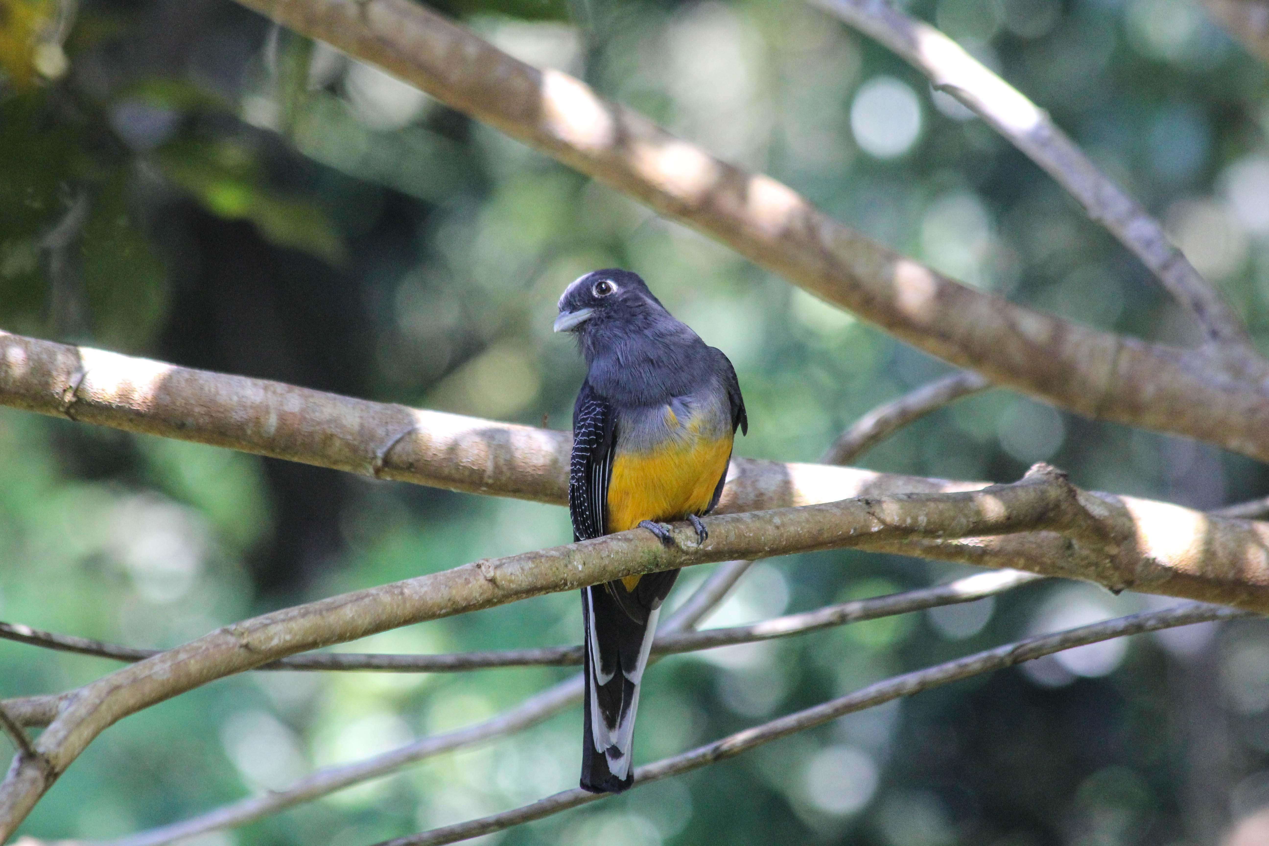 bird SBR.jpg