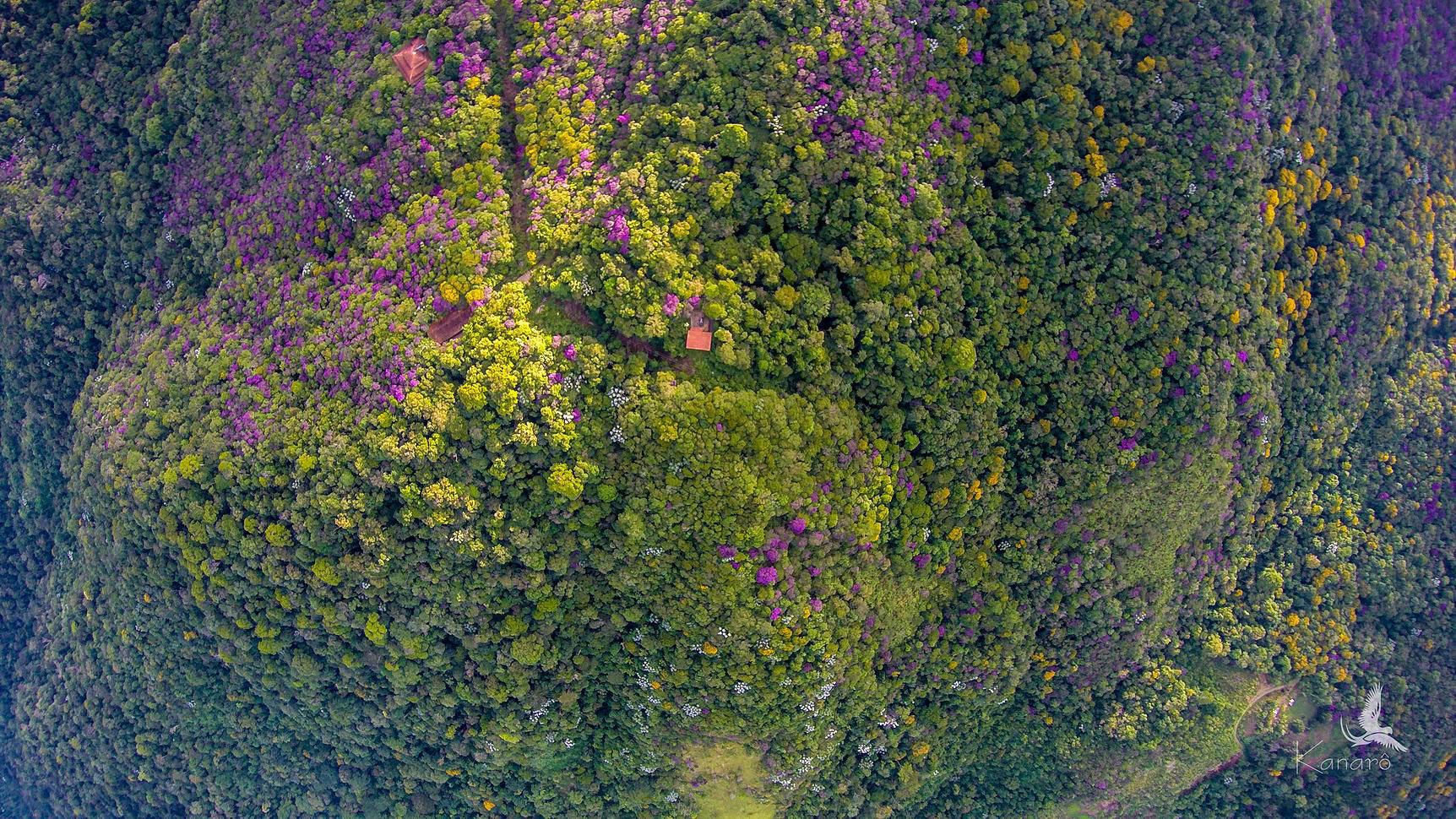 aerial view SBR_.jpg
