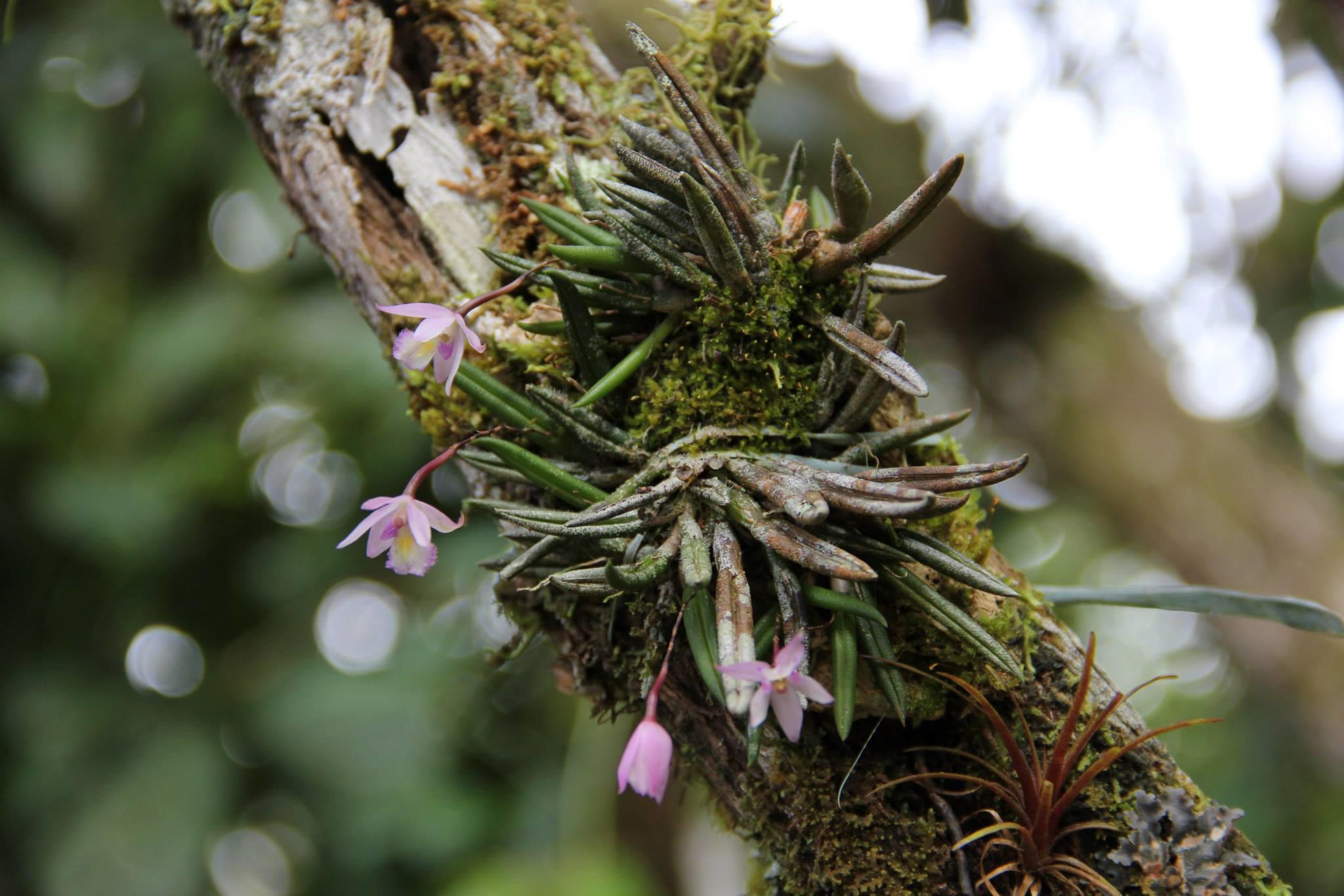 Wild Orchid SBR.jpg