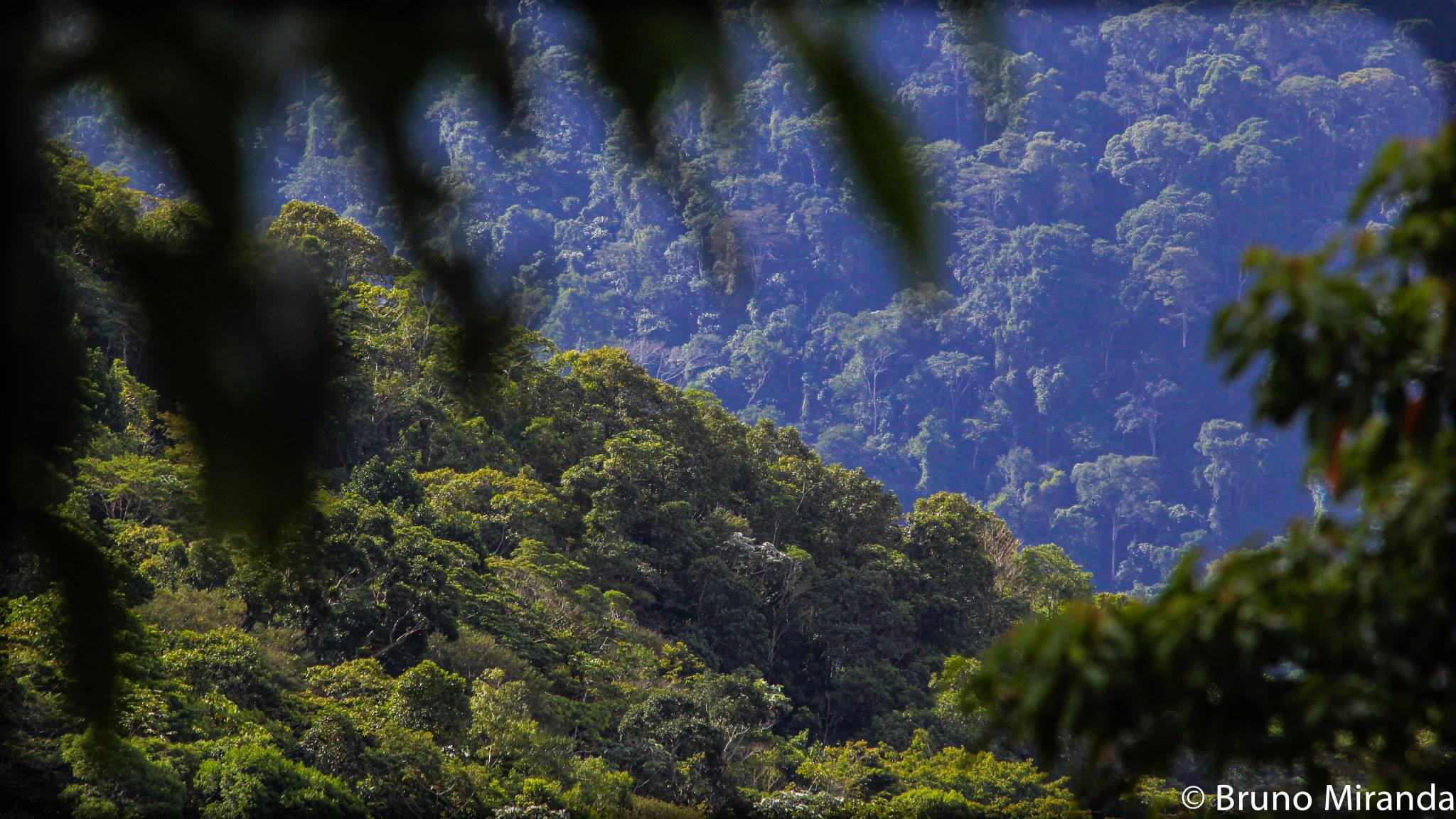 Forest SBR.jpg