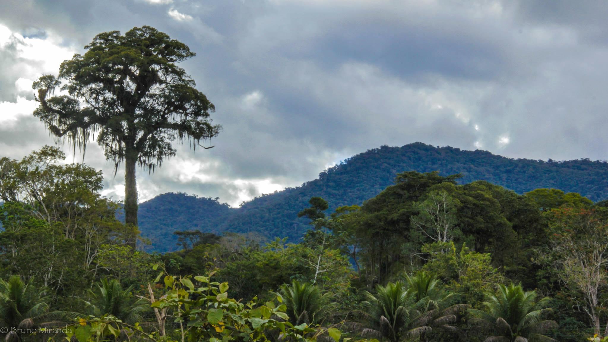 Serra Bonita Profile.jpg