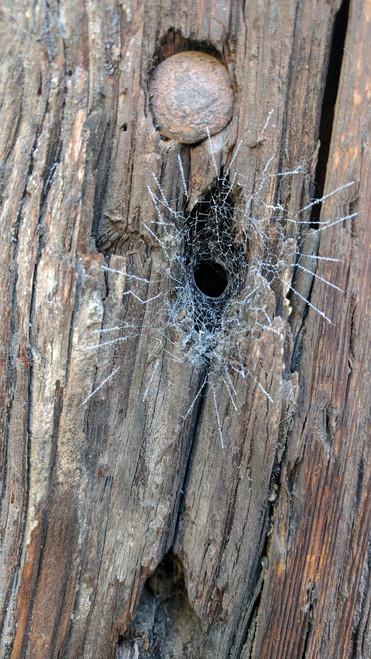Toile de l'araignée Agélène labyrinthe, Milan, 2017