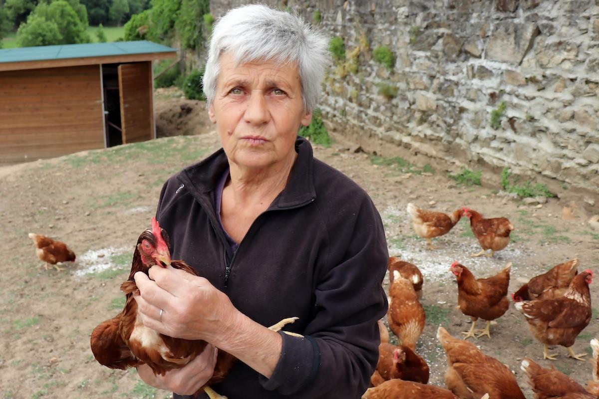 Chantal, élevage de poules pondeuses