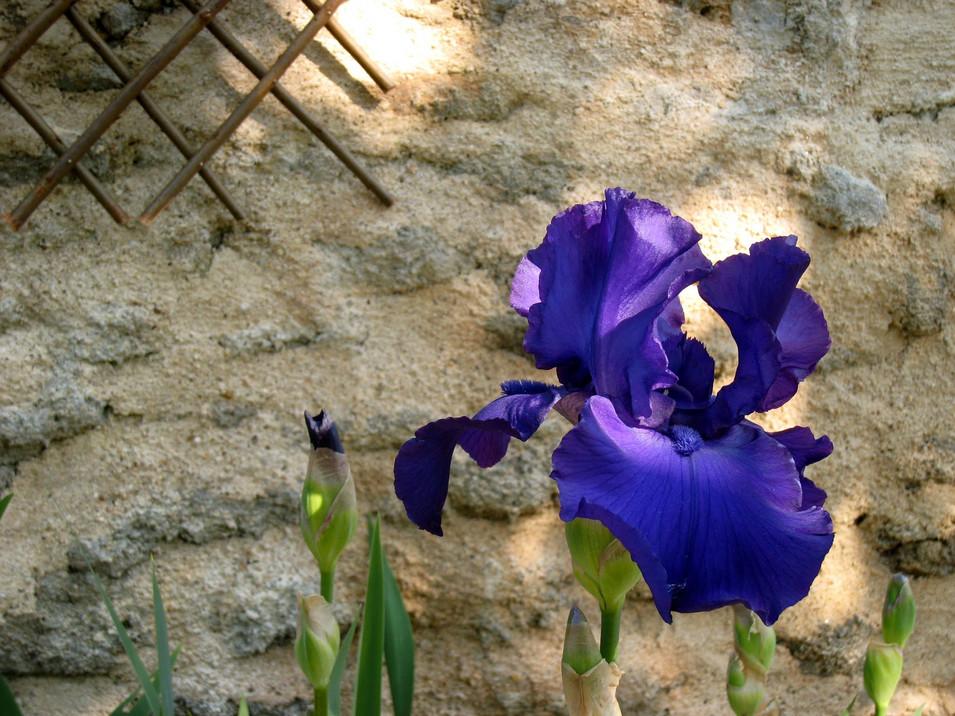 Iris, 2011