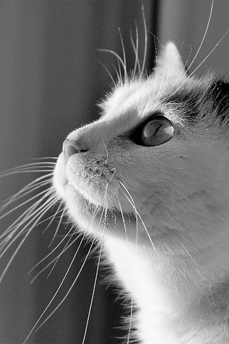 cat-1997622_1920_edited.jpg