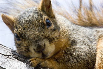 squirrel-4644265_1920_edited.jpg