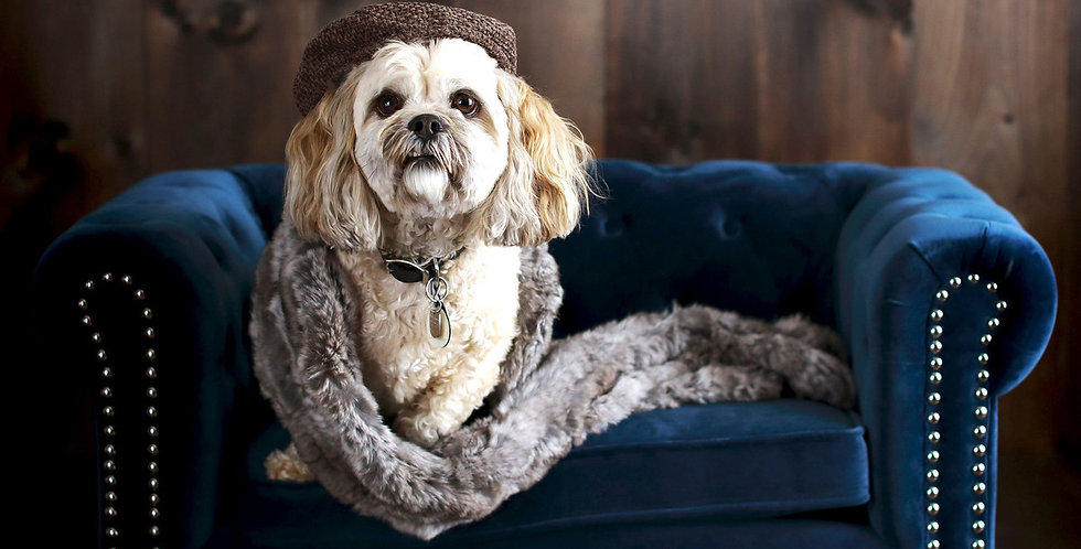 Bruno's Blue Pet Bed