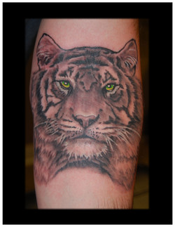 g-tiger