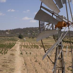 windmill-on-farm.jpg