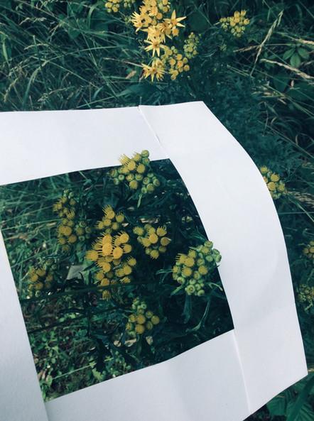 Samantha - Flower Explosion.jpg