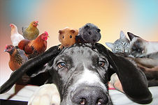 montage-animaux-180.jpg