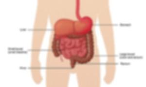 gastrointestinal tract.jpg