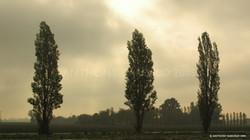 trio_of_trees