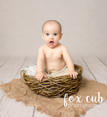 fox cub photography