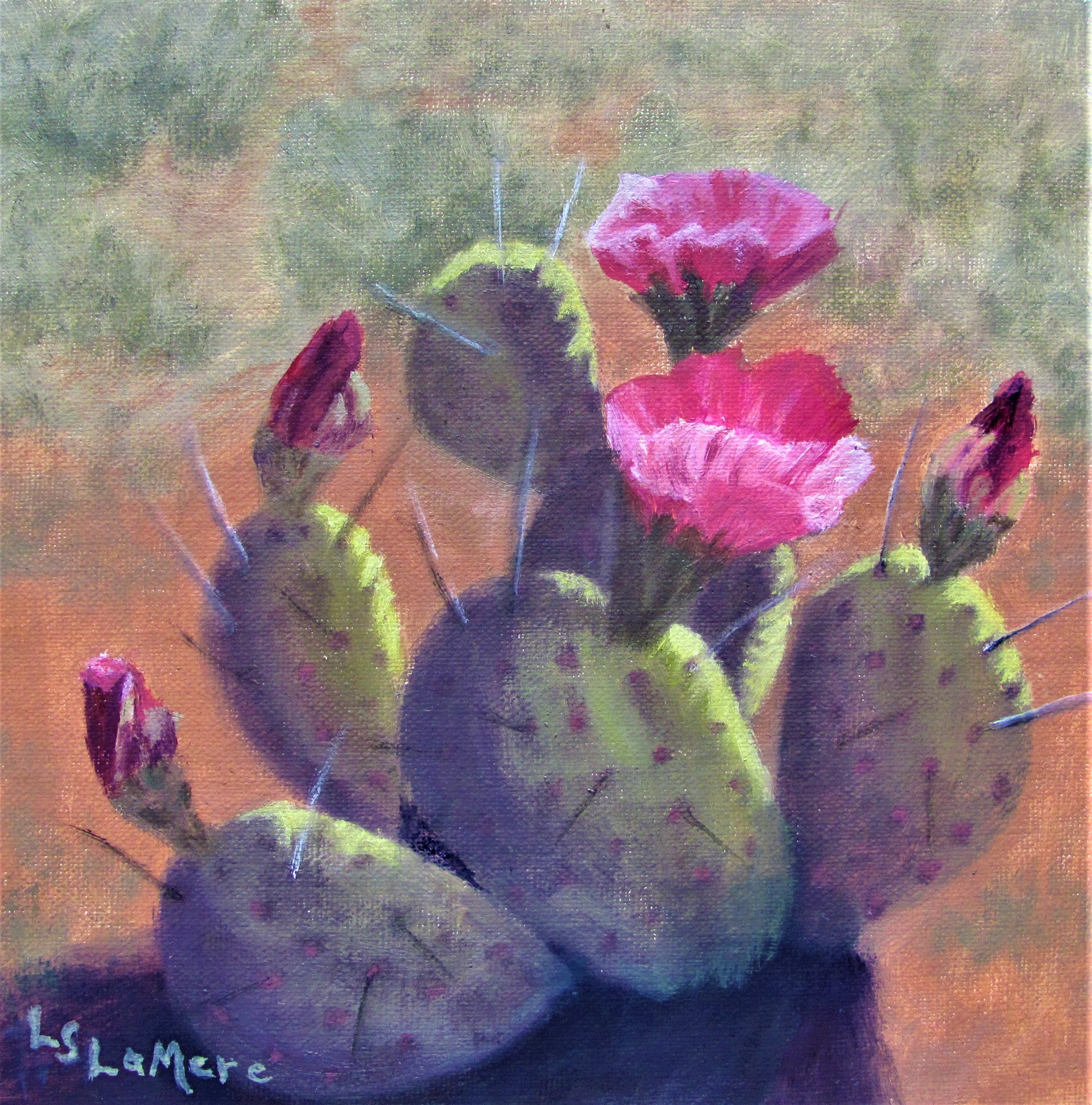 """Cacti in Bloom'"