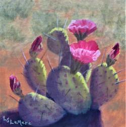 """""""Cacti in Bloom'"""
