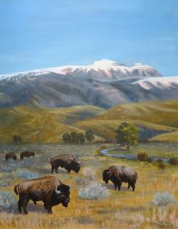 """Where The Buffalo Roam"""
