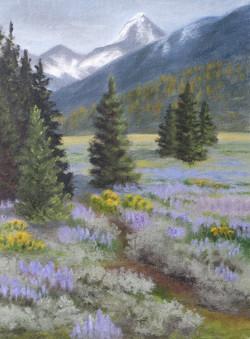 """""""Lupin Meadow"""""""