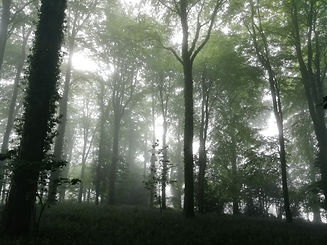 Early morning mist copse May 2020.jpg