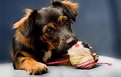 puppies_mutt.jpg