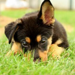 3.21.14-National-Puppy-Day5.jpg