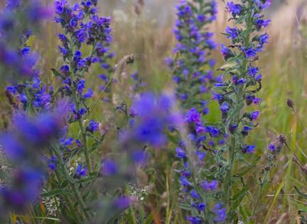 Wildflower Inspiration