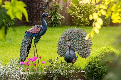 Metal peacocks lifestyle garden ornaments