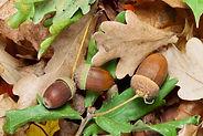 chene-fruit-gland-main-12638429.jpg