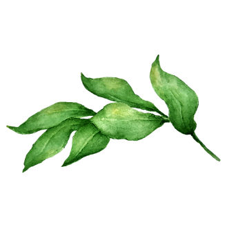 Leaves%202_edited.png