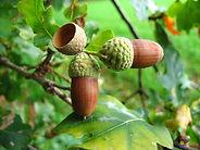 Visoflora-fruits-498.jpg