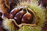chestnuts-4528127_1280.jpg