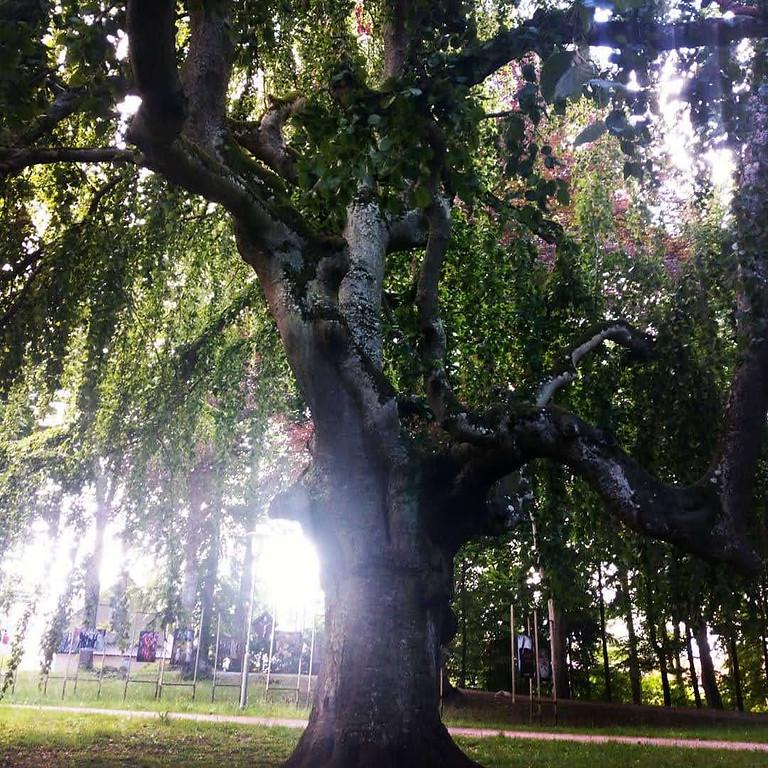 Yoga im Park (1)