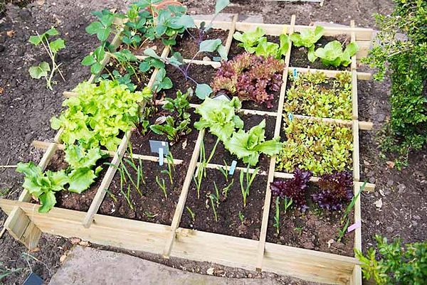 square-foot-garden-from-above.jpg