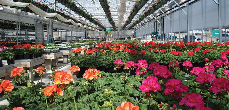 Pinehurst Resort Greenhouses