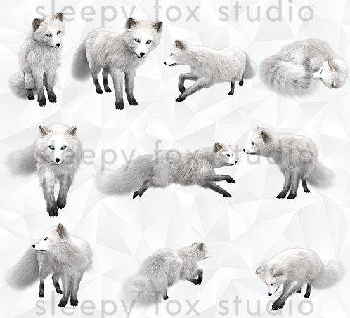 fox - arctic