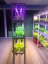 LED T8 Plant