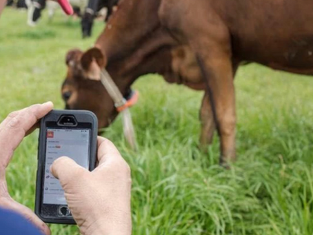 Is the world ready for dairy cows armed with artificial intelligence?