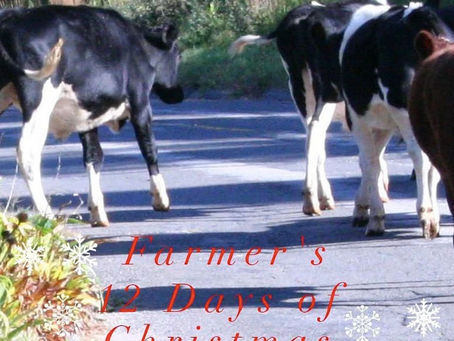 Long ago, when people traveled and wanted milk, they had to take their cows with them...