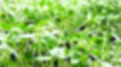 Sunflower CU.jpg