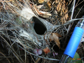 Funnel web spider hole