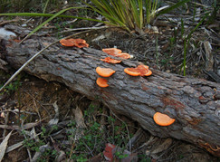 Fungal growth and associated fungal decay