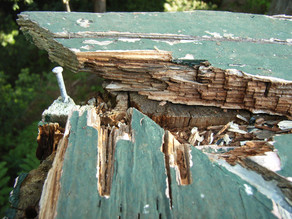 Fungal decay in deck handrail