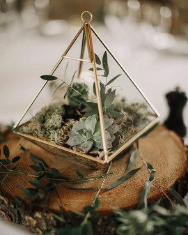 Have you seen our terrariums_ these supe