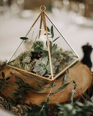 Have you seen our terrariums? these supe
