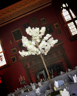 How gorgeous do our new blossom trees lo