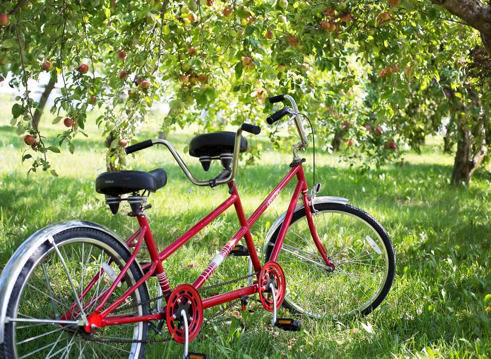 tandem-bike_web.jpg