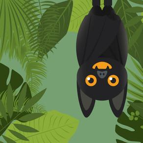 Animation : Les chauves-souris du Pays de Bray