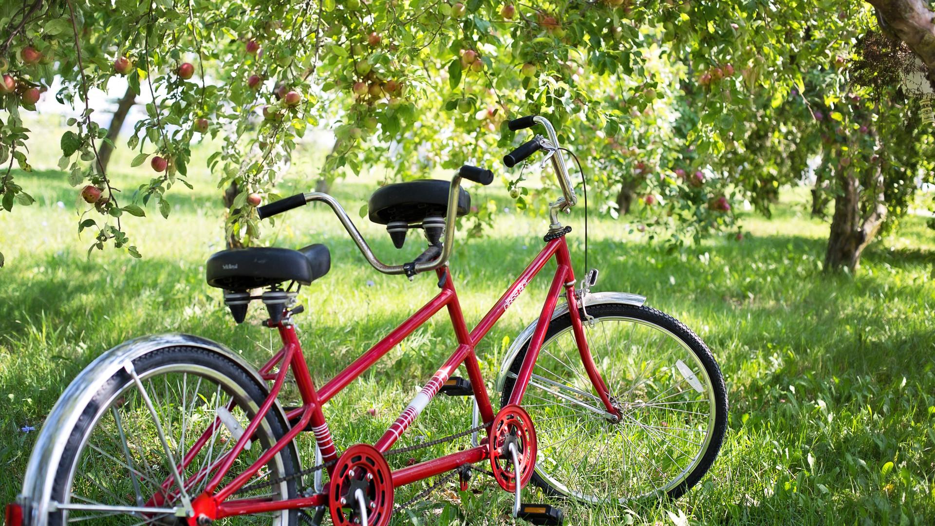 tandem-bike-905067.jpg
